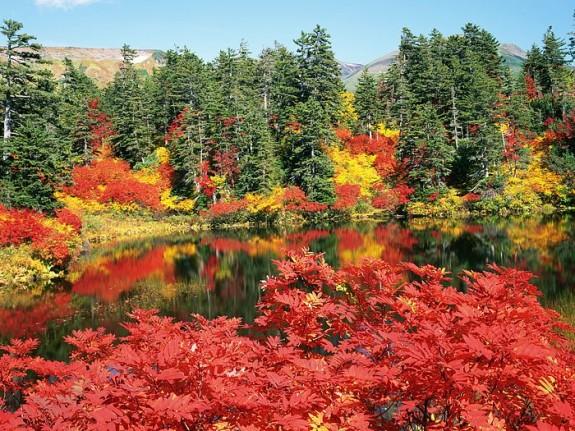 Fall Foliage, Hokkaido, Japan