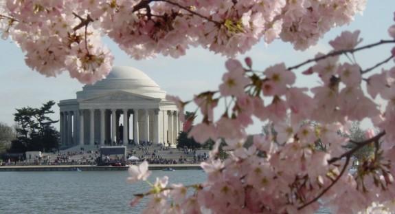 National Cherry Blossom Festival, Washington, D.C.