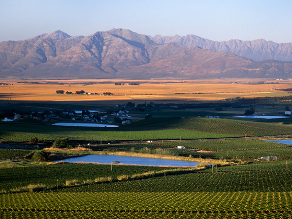 Swartland Wine and Olive Route, Western Cape, South Africa