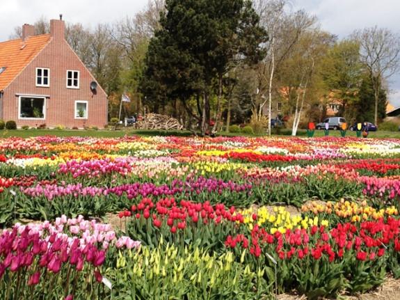 Tulpenfestival, Noordoostpolder, Netherlands