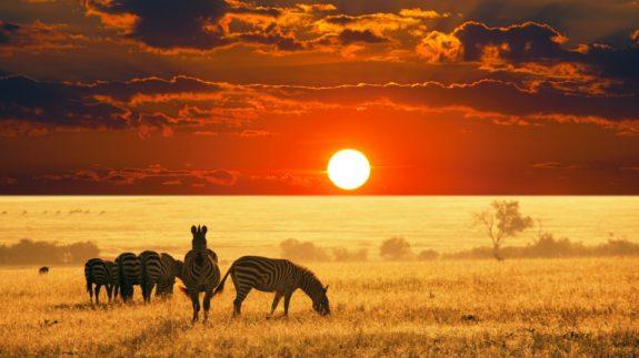 go-for-safari