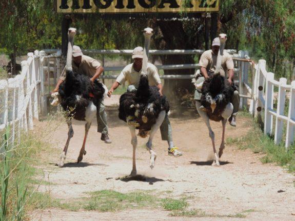 ride-an-ostrich