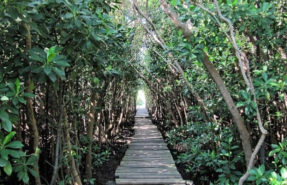 Beachwood Mangroves Nature Reserve