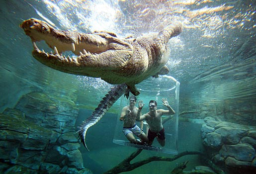 Diving with Crocodiles in Wild Africa